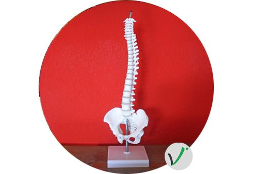 Bild Wirbelsäule Rückenschulkurse Fitness Rückenschmerzen Recmhingen Königsbach-Stein Vitale Akademie Ehmann