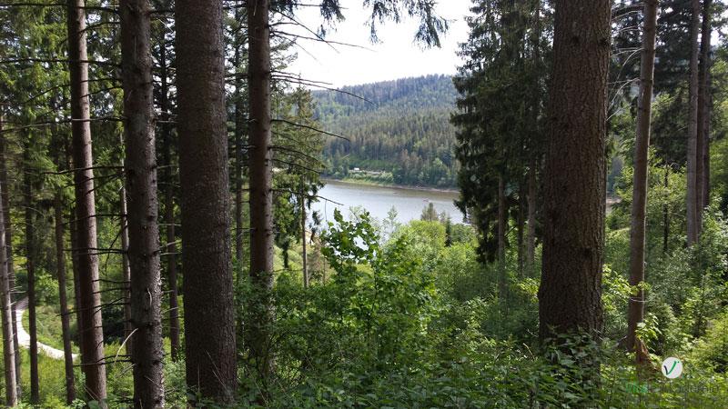 Westweg Etappe 3 Forbach Unterstmatt Lukas Ehmann